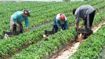 şomaj spania agricultură
