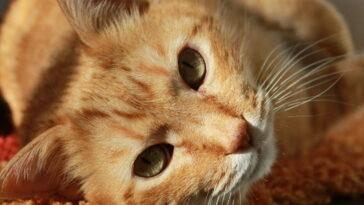 femeie spania mancata de pisici