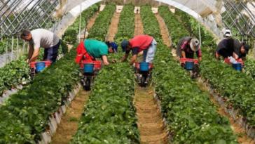 muncitori spania